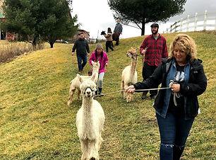 alpaca hike.jpg