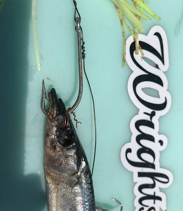 Wrightsville Beach Fishing Report 6-23-18 | Wrightsville