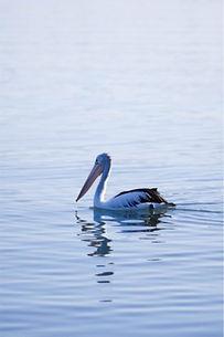 Lake Mac.jpg