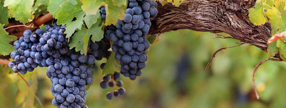 vineyardwinery_top_img01_grapes.jpg
