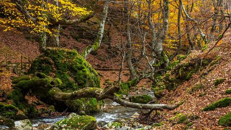 5 bosques para disfrutar de los colores del otoño en Castilla y León