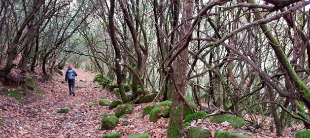 Bosque de Madroñal. Fuente: La Gaceta