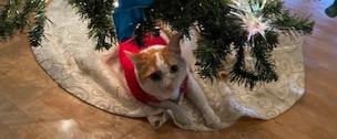Covid Christmas Present