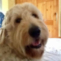 Ted2. Ted the Doodle. Our Mascot.jpg