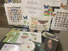 Our butterfly station for friends to explore