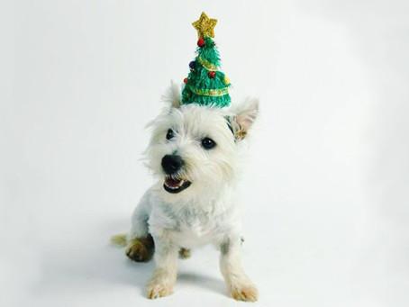 CHRISTMAS DOG BOARDING IN LITTLE ROCK, ARKANSAS