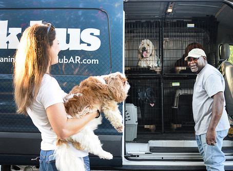 SEND YOUR DOG TO DAYCARE ON THE BARK BUS