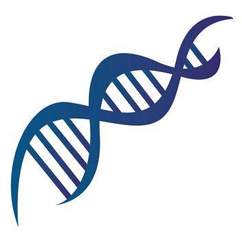 Cadena ADN favi.jpg