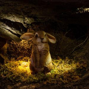 Kaninchenbau.jpg