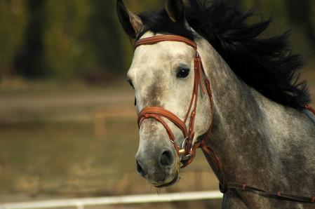 horse-4950681_1920.jpg