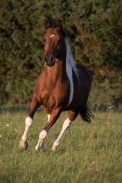 horse-5576666_1920.jpg