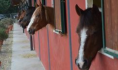 horses-4898003_1920.jpg
