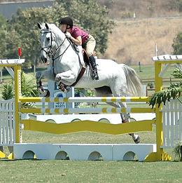 horse-4755814_1920.jpg
