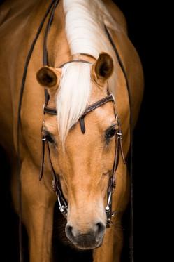 cavalry-3536473_1920 (1).jpg