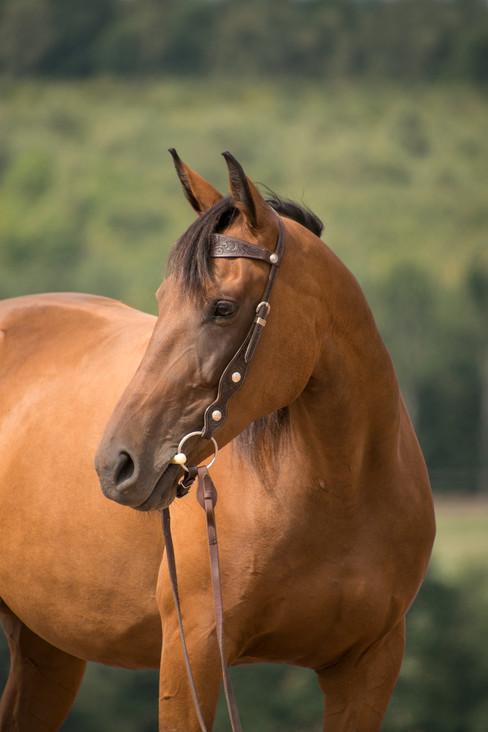 horse-3601033_1920.jpg
