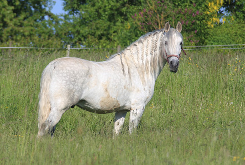 pre-stallion-4960475_1920.jpg