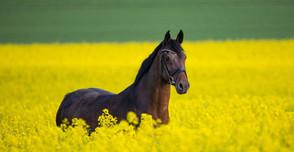 horse-3888661_1920 (1).jpg