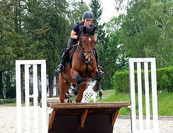 horse-1547248_1920.jpg