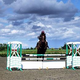 horse-259229_1920.jpg
