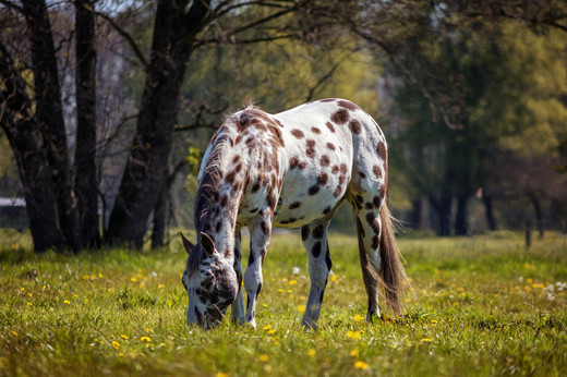 horse-3009771_1920.jpg