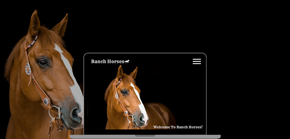 Horse Ranch Web Design