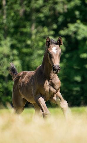 horse-3419436_1920.jpg