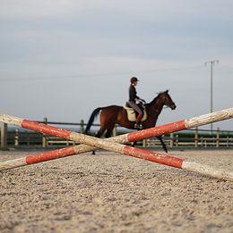 horse-3362109_1920.jpg