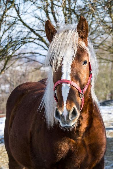 horse-2072236_1920.jpg