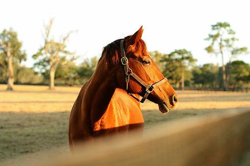 horse-532.jpg