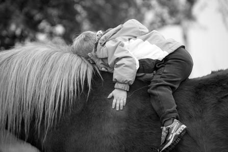 pony-3759589_1920.jpg