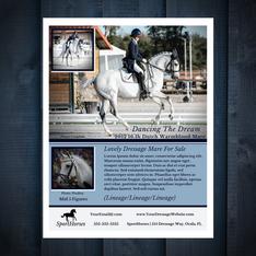 Horse Marketing Flyer Sample