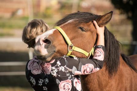 horse-3712842_1920.jpg