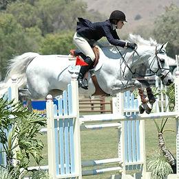 horse-4757973_1920.jpg