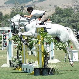 horse-4755823_1920.jpg