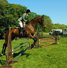 horse-71081_960_720.jpg