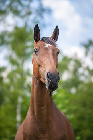 horse-4074212_1920.jpg