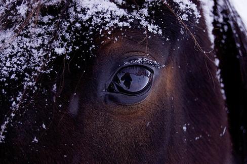 Equine Details