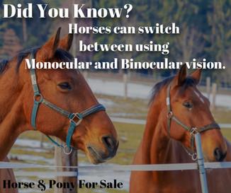 Horse Eye Fact