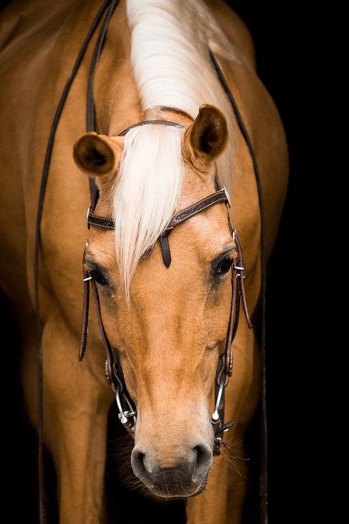 cavalry-3536473_1920.jpg