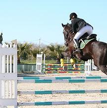 horse-1076551_1280.jpg