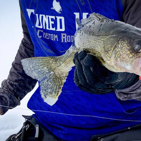 Mille Lacs Glo-Shot Jig Walleyes