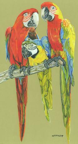 Macaws a Trois