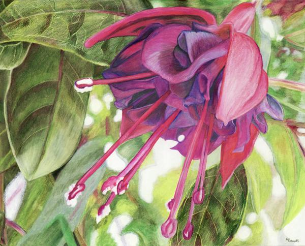 Look Into the Fuchsia