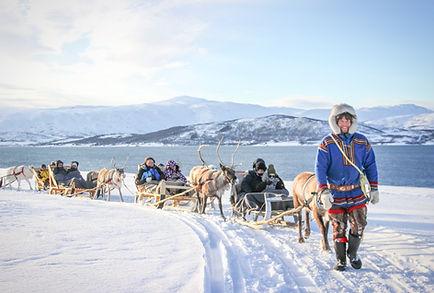 Reindeer sledding Tromsø Arctic Reindeer