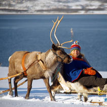 Reindeer sledding by the shore