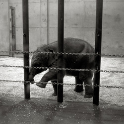 Éléphant.cirque