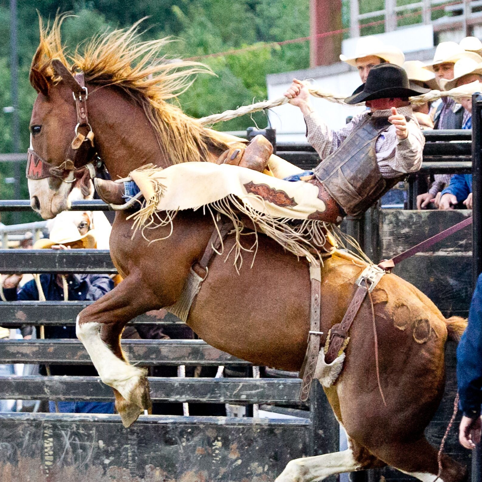 Saddle Bronc Riding 2