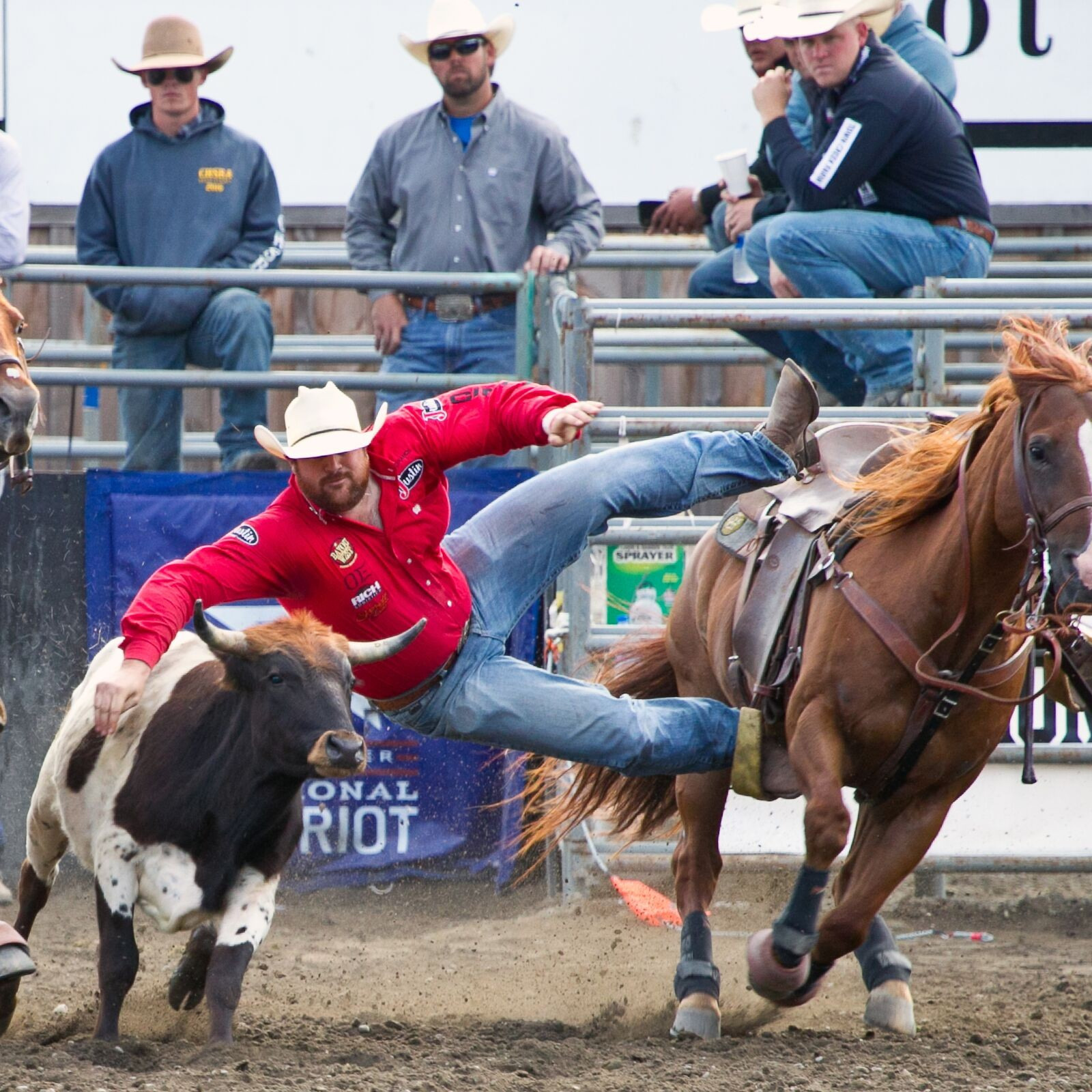 Steer Wrestling 1