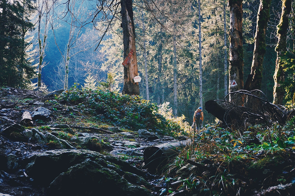 Road Trip Whistler to Tofino