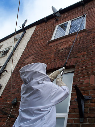 pest control in tameside, controlling a wasp nest in an attic, in ashton under lyne